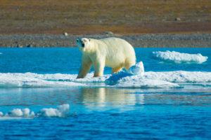 a polar bear on a melting ice flow in the arctic