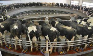 2018-10-05 Rotary milking parlour 1