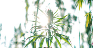 Cannabis Makers Like Canopy Growth Have a $16 Billion Opportunity in U...
