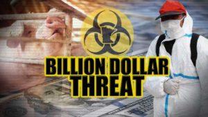 Billion dollar threat: Foreign pig disease could paralyze Minnesota ec...