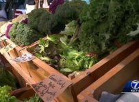 """Gather"" mobile kitchen brings people, farmers markets together"