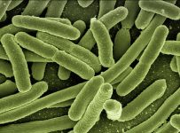 Scientists expose fascinating 'compartments' in bacteria